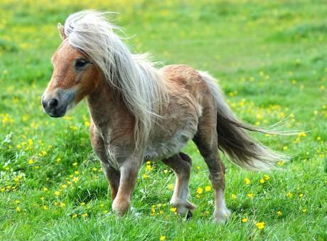 cool-pony